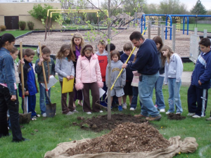 Planting Trees at Playground